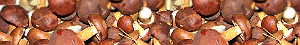 BrownVeggies mushroom