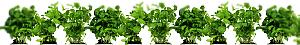 GreenOthers herbes